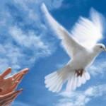 Avec le grand âge, une recherche spirituelle