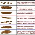 évaluer la diarrhée avec l'échelle de bristol