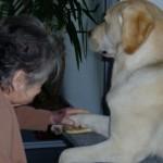 chien thérapeutique